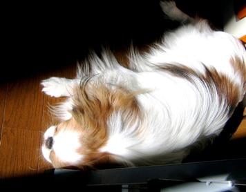 陽だまり犬3