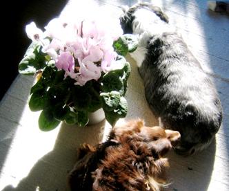 陽だまり犬's