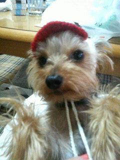 ルシィの帽子2