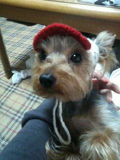 ルシィの帽子1