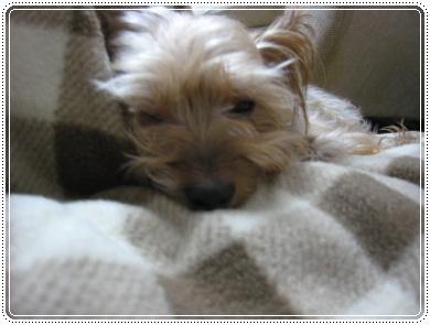 ルシィ寝顔