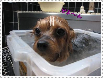 ショコ風呂1