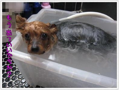ショコ風呂2