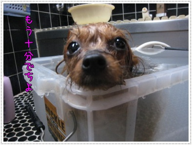 ショコ風呂3