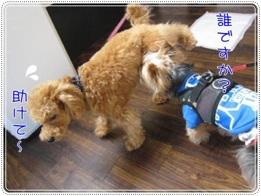 ちょぱ亭7