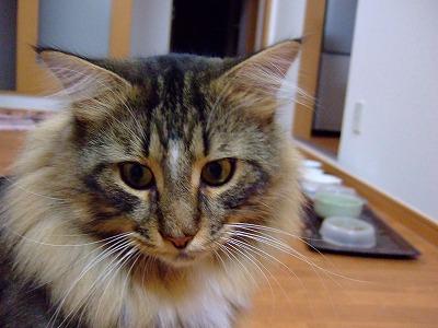 2008_0929-1.jpg