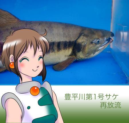 リンカちゃんと第1号サケ