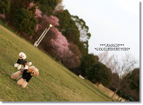 2008-03-19-12_.jpg