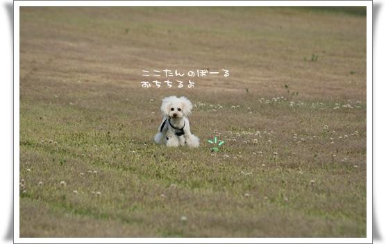 2008-05-11-6.jpg