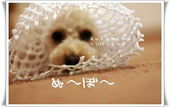2008-05-16-006meru.jpg
