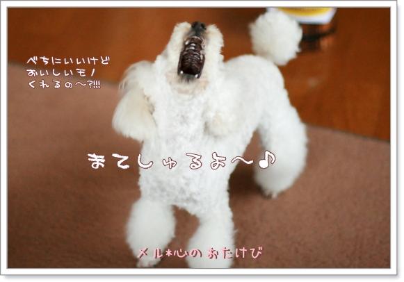 2008-05-21-04-2.jpg