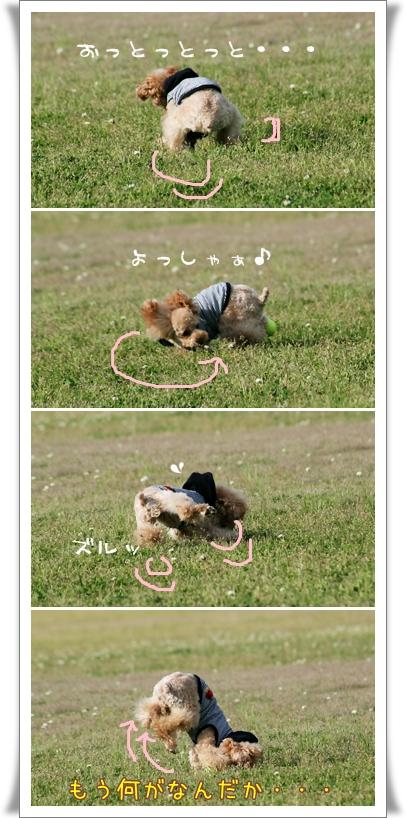2008-05-tonboike-20-1-1.jpg