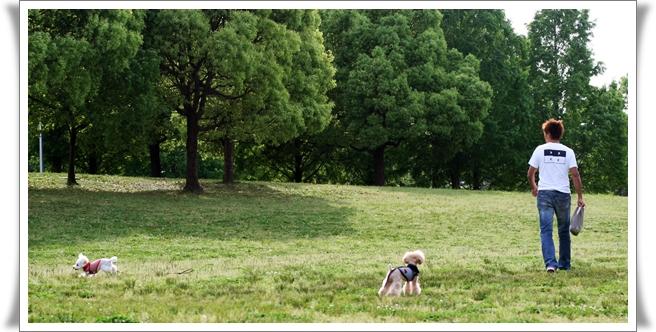2008-05-tonboike-4.jpg