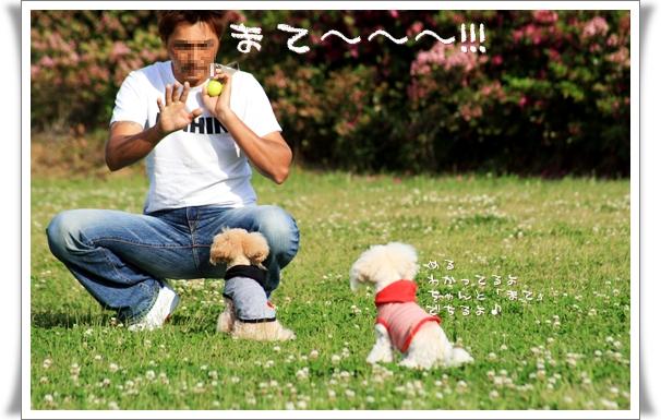 2008-05-tonboike-9.jpg