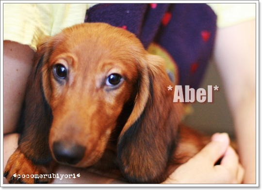 2008-07-22-Abel.jpg