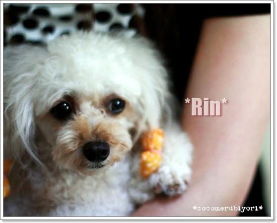 2008-07-22-Rin.jpg