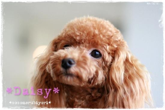 2008-08-02-daisy-1.jpg