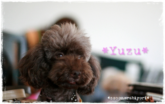 2008-08-02-yuzu-1.jpg