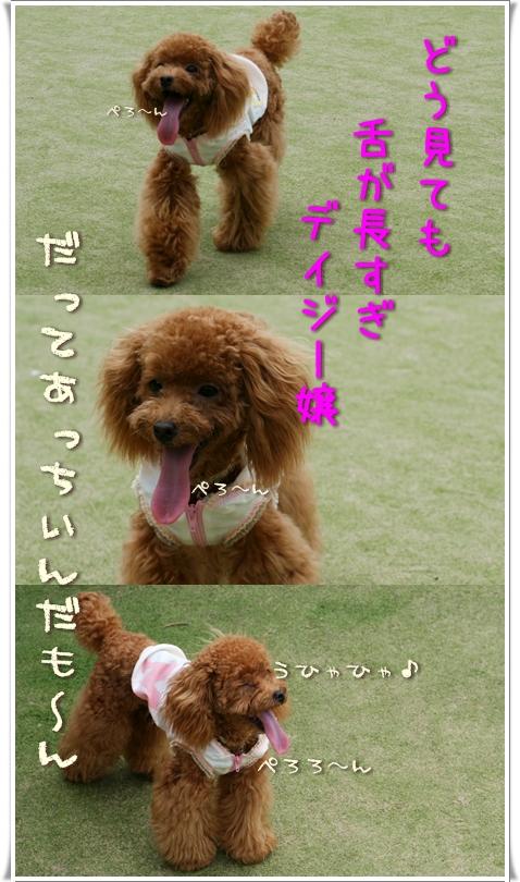 2008-08-08-daisy-000.jpg