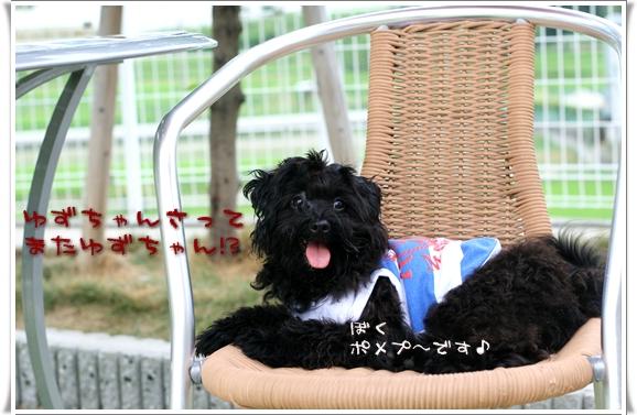 2008-08-08-pomepu-yuzu.jpg