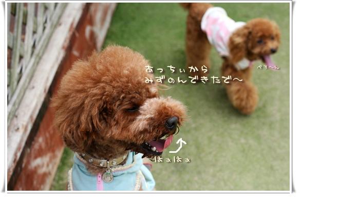 2008-08-08-rooney-000.jpg