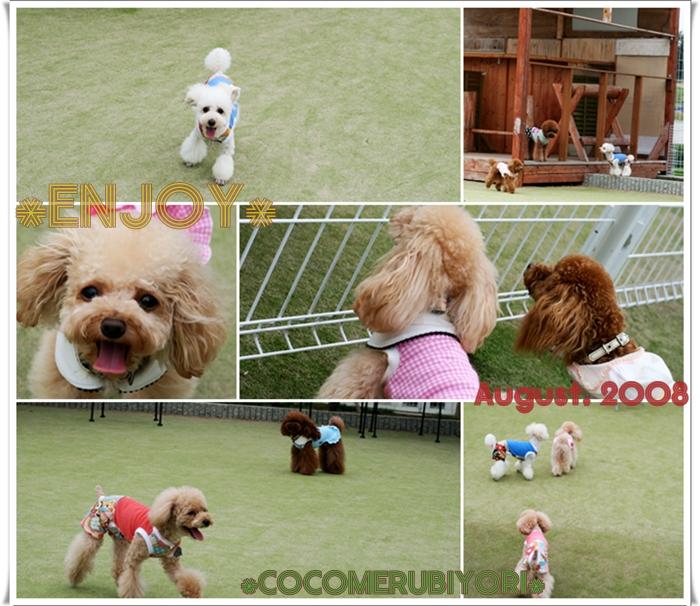 2008-08-08-run-003.jpg