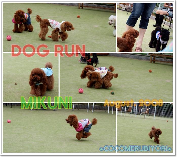 2008-08-08-run-1.jpg