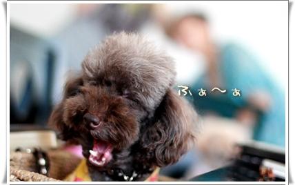 2008-08-08-yuzu-3.jpg