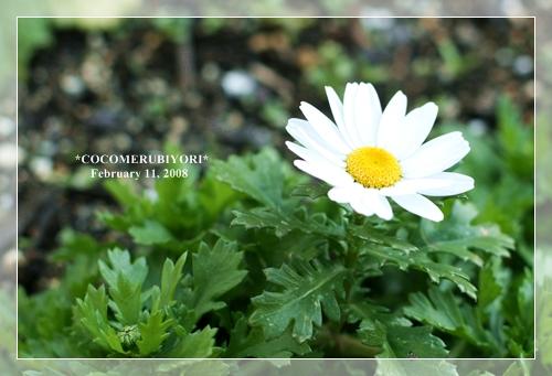 IMG_'8-02-11-6