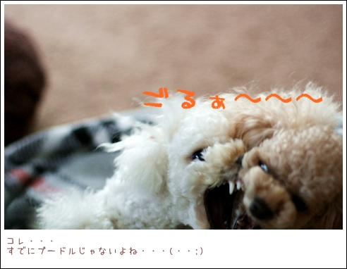 IMG_エイリアン再び-9