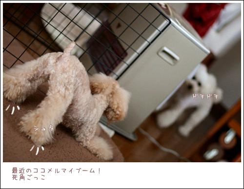 IMG_エイリアン再び-7