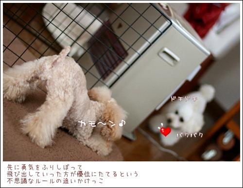 IMG_エイリアン再び-8