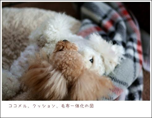 IMG_エイリアン再び-10