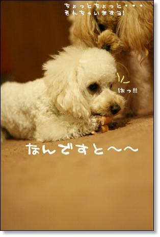 ブログ リアル2008-03-10-11