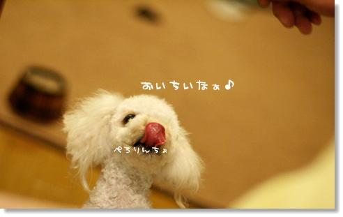 ブログ2008-03-11-13