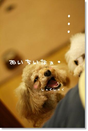ブログ2008-03-11-21