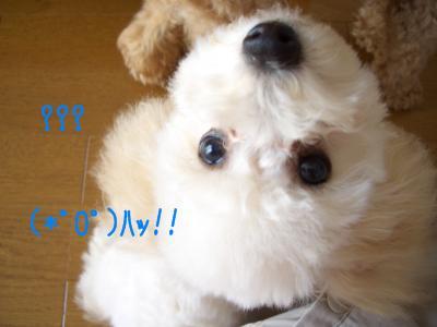 CIMG6736.jpg