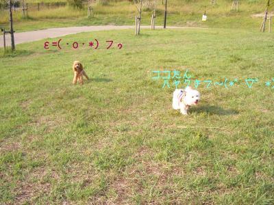 CIMG7077.jpg