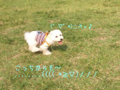 CIMG7148.jpg