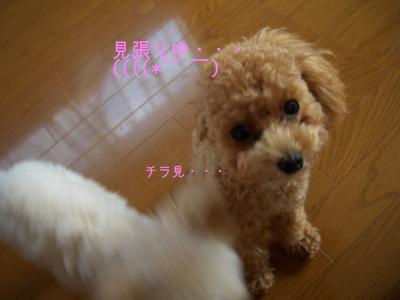 CIMG7183.jpg