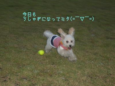CIMG7485.jpg