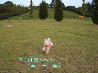 CIMG7504.jpg