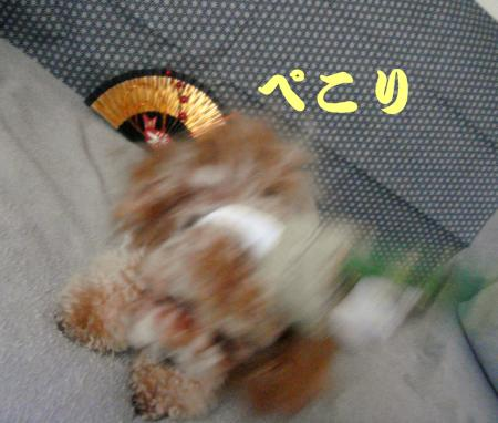 DSC04779.jpg