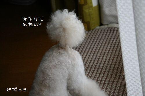 IMG_09822.jpg
