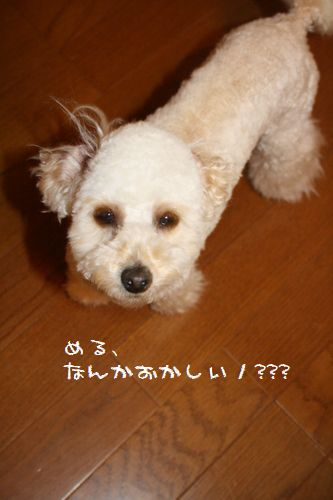 IMG_20703.jpg