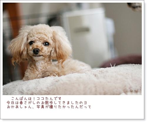 IMG_8451.jpg