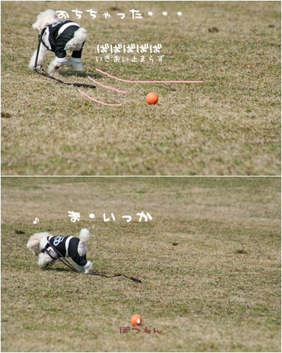 cats_2008-03-13-005.jpg