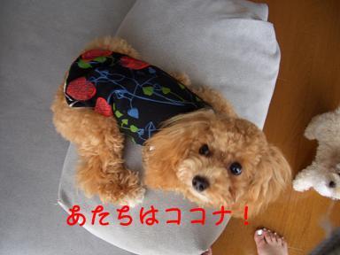 cocoCIMG4169.jpg