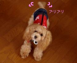 kotaeDSC04382.jpg