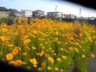 黄色い花とお墓